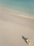 Conch Shell on Grace Bay Beach  Providenciales  Turks and Caicos Islands  West Indies  Caribbean