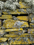 Lichen on Rocks  Broch of Mousa  Mousa Island  Shetland Island  Scotland  United Kingdom  Europe