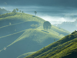 Early Morning Mist over Tea Plantations  Near Munnar  Kerala  India  Asia
