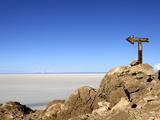 Cactus Arrow on Isla de Los Pescadores and Salt Flats  Salar de Uyuni  Southwest Highlands  Bolivia