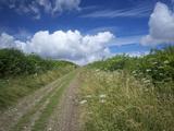 The South Downs Way  Hampshire  England  United Kingdom  Europe