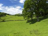 Loughrigg Fell  Lake District National Park  Cumbria  England  United Kingdom  Europe