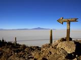 Cactus Arrow on Isla de Los Pescadores  Volcan Tunupa and Salt Flats  Salar de Uyuni  Bolivia