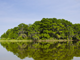 Everglades  UNESCO World Heritage Site  Florida  United States of America  North America