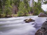 River in Yosemite National Park  UNESCO World Heritage Site  Yosemite  California  USA