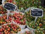 Tulips  Bloemenmarkt  Amsterdam  Holland  Europe