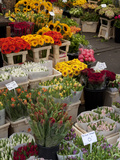 Flower Stall  Bloemenmarkt  Amsterdam  Holland  Europe