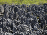 Rock Formations in Hell  Grand Cayman  Cayman Islands  Greater Antilles  West Indies  Caribbean