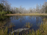 Everglades National Park  UNESCO World Heritage Site  Florida  USA  North America