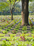 Lines of Thousands of Graves Among Trees at Kanchanaburi War Cemetery  Thailand  Southeast Asia