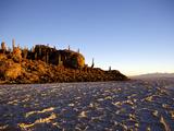 Cacti on Isla de Los Pescadores and Salt Flats  Salar de Uyuni  Southwest Highlands  Bolivia
