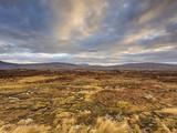 Dawn over Open Expanse of Rannoch Moor  Near Glencoe  Scottish Highlands  Scotland
