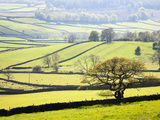 Wharfedale Near Appletreewick  Yorkshire Dales  Yorkshire  England  United Kingdom  Europe