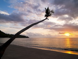 Overhanging Palm Tree at Nippah Beach at Sunset  Lombok Island  Indonesia  Southeast Asia