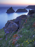 Kynance Cove  the Lizard  Cornwall  England  United Kingdom  Europe