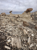 Petrified Wood in the Badlands on a Cloudy Day  San Juan Basin  New Mexico  USA  North America
