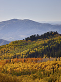 Yellow and Orange Aspens in the Fall  Wasatch Mountain State Park  Utah  USA  North America