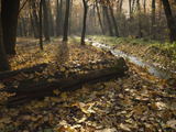 Autumn Leaves in Forest Along Cervenomlynsky Creek  Village of Miskovice  Prague  Czech Republic