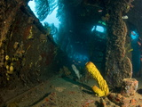 Coral Growth Inside Wreck of Lesleen M Freighter  Sunk in 1985 in Anse Cochon Bay  St Lucia