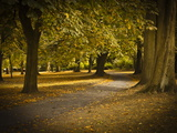 Autumn Path in Regents Park  London  England  United Kingdom  Europe