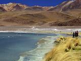 Laguna Canapa  South Lipez  Southwest Highlands  Bolivia  South America