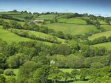Fields Near Cadleigh  Mid Devon  Devon  England  United Kingdom  Europe