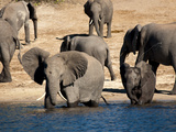 Elephants Drinking  Namibia  Africa