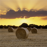 Hay Bales at Sunset  East Sussex  England  United Kingdom  Europe