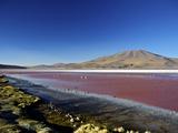 Flamingos on Laguna Colorada (Red Lagoon)  Eduardo Avaroa Andean Fauna Nat'l Reserve  Bolivia
