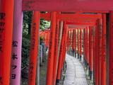 Torii at the Nezu-Jinja Shrine  Tokyo  Japan  Asia