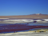 Flamingos on Laguna Colorada (Red Lagoon)  Eduardo Avaroa Andean Fauna Nat'l Reserve  Bolivia
