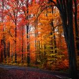 Arc en ciel d'automne Papier Photo par Philippe Sainte-Laudy
