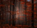 Forêt Spirituelle Reproduction d'art par Philippe Sainte-Laudy