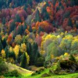 Autumn Erupting