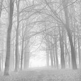 Morning Mists Iv Papier Photo par Doug Chinnery