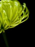 Floral Close-Up 3