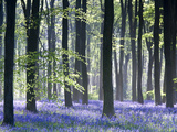 Bluebell Vision Reproduction d'art par Doug Chinnery