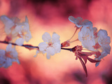 Spring Time 2