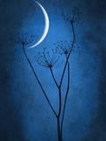 Bleu Lune Reproduction photo par Philippe Sainte-Laudy