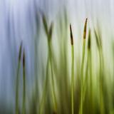 Velours forêt Papier Photo par Ursula Abresch