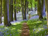 Promenade dans les bois Papier Photo par Doug Chinnery