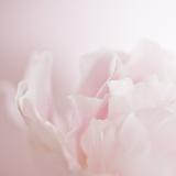 Softly Pink
