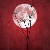 Donne-moi la lune Reproduction photo par Philippe Sainte-Laudy