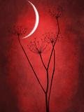 Rouge lune Papier Photo par Philippe Sainte-Laudy