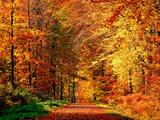 Chemin d'automne Papier Photo par Philippe Sainte-Laudy
