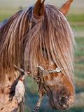 Mongolian Ponies II