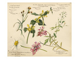 Wildflower composite plate no XVI