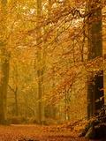 It's Raining Leaves II