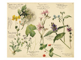 Wild flowers composite