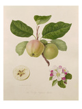 The Early Russian Apple